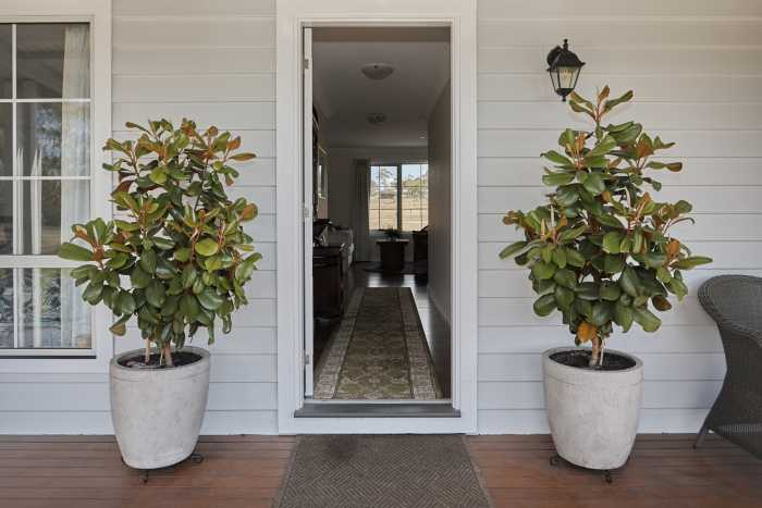 Fruit trees at Entrance of cottage